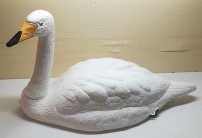 Live Swan joutsen