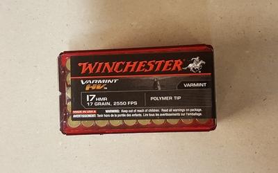 Winchester Varmint 17 HMR Polymer tip